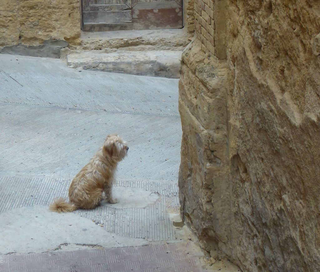 Agrigento Hund