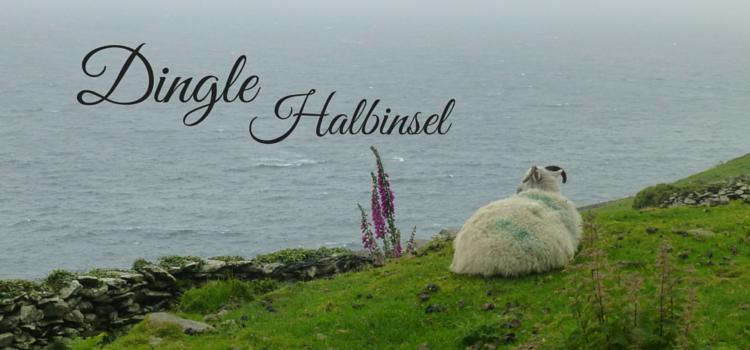 Dingle Irland Schaf