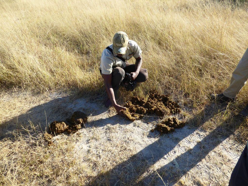Fährten lesen Okavango Delta