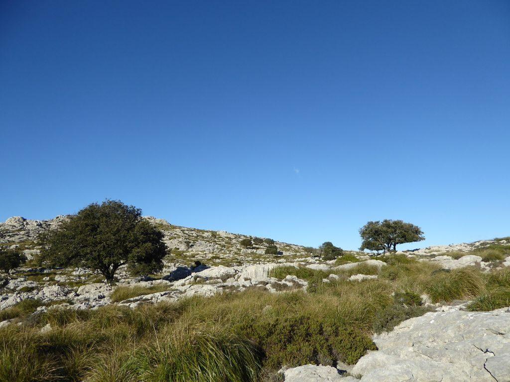 Mallorca Heide kleine Wanderung im Valldemossa