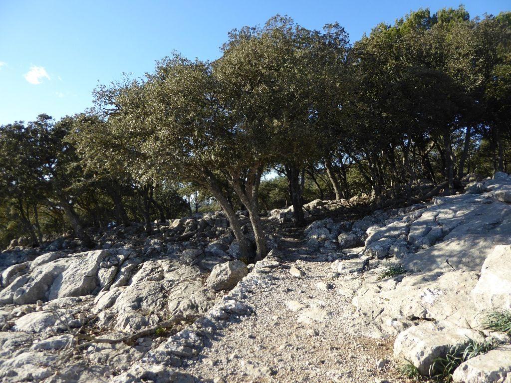 Mallorca kleine Wanderung im Valldemossa Wald