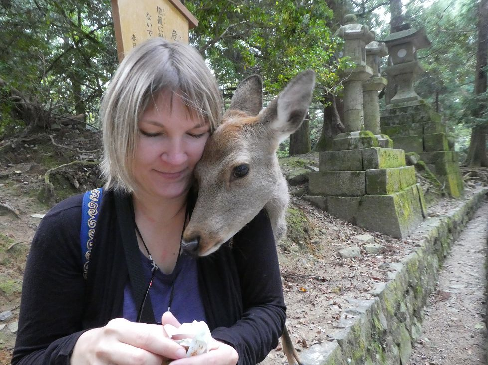 Japan Rehe in Nara füttern