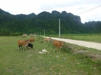 Chay Lap Homestay