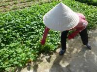 Kräutergarten Vietnam