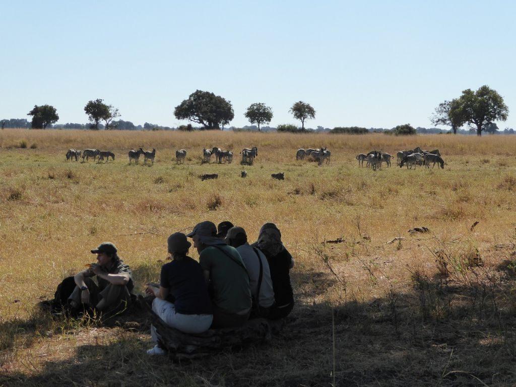 Picknick bei Zebras Okavango Delta
