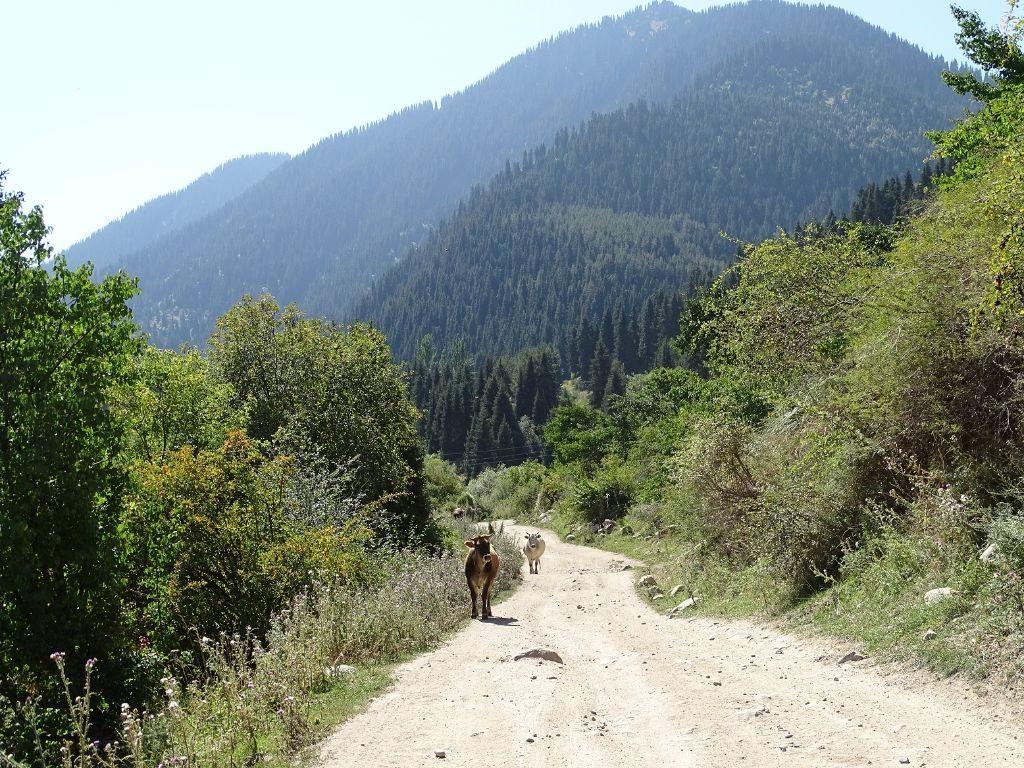 Wanderung ins Altyn Arashan Tal
