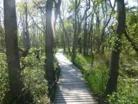 Darßer Ort Rundwanderweg